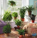 Комнатные растения и борьба с лишним весом.