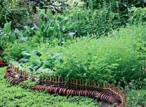 Пищевые травы