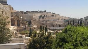 Израиль. Природа радостм